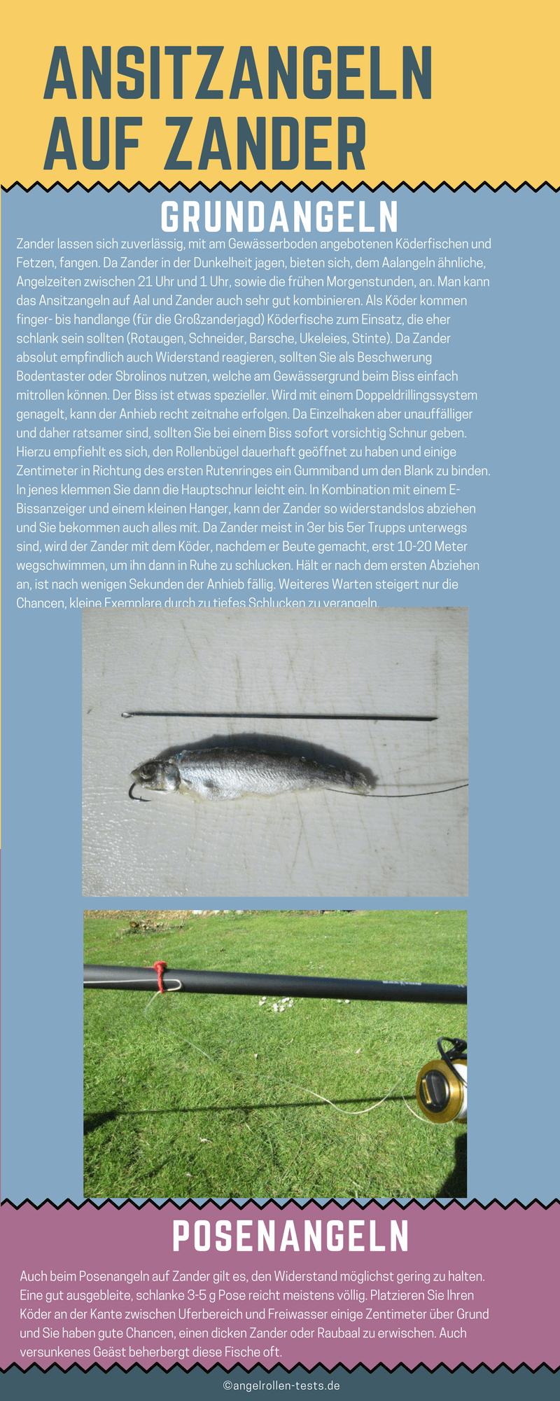Zander mit Köderfisch
